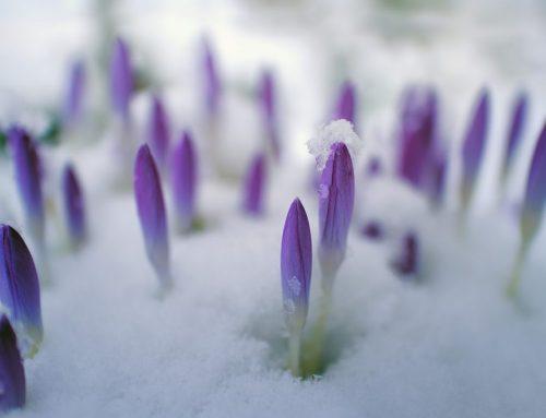 春回大地,排毒好時機!
